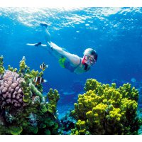 BALI Snorkeling + Glass Bottom Boat + Turtle Island