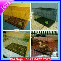 [Recommended] Kandang Kucing Size XL (75X50X50)