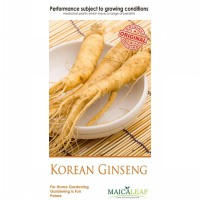 1 Pack Benih GINGSENG KOREA - 10 Seeds. Maica Leaf