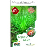 1 Pack Benih Rumput Aquarium (Aquatic Grass) Maica Leaf