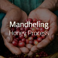 Green Bean Kopi Arabica Mandheling 'Honey Process' - 1 Kg