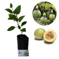 Paket Bibit Markisa - Bibit + Planter Bag 25L