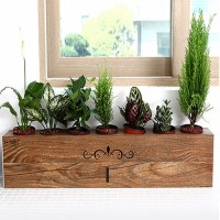 Patented integrated planter tray wet wood style geonsaeng Living Standard mini potted potted jeongridae tray shelves