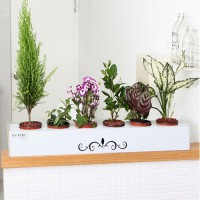 Patented integrated planter pots shelf tray Standard tray geonsaeng gray ware pots shelf life