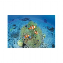 Epoch jigsaw Puzzle Colorful Fishes