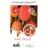1 Pack GAC FRUIT Vietnam - 10 Seeds