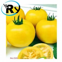 (Termurah) Benih Tomat Big Yellow Big Yellow Tomato Import - Yellow