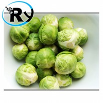 (Termurah) Benih Brussel Sprouts Import - Green
