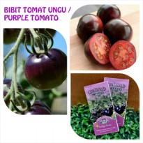 BIBIT / BENIH TOMAT UNGU - INDIGO ROSE PURPLE COLOURED TOMATO