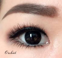 Occhio Premium Eyelashes - Cosmo/Lilac/Marigold/Buttercup/Canna/Orchid/Azalea/Aster