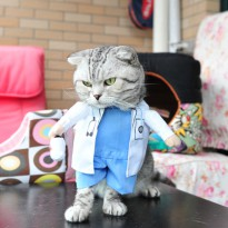 Baju Kucing Cat Funny Halloween Cosplay Size L - Blue
