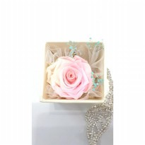 Box A Single Light Pink Multicolor Rose Admiration Preserved Flower