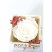 Box A Single White Rose Beauty Preserved Flower Represent Innocent