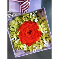 Bloom Box Big Red Rose Beauty Preserved Flower Best For Gift