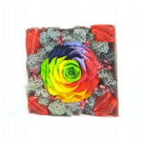 Bloom Box Big Rainbow Rose Mesmerizing Preserved Flower