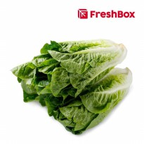 FreshBox Romaine Lettuce 500 gr