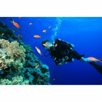 Dive in Nusa Dua Voucher 2x include lunch (Disc 40%)