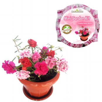 Mini Garden Kit – Portulaca Double Petal Mixed