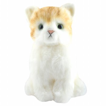 [] DOUSIN innocence Real Cat Cat Japan Gifts _ orange cat / sit